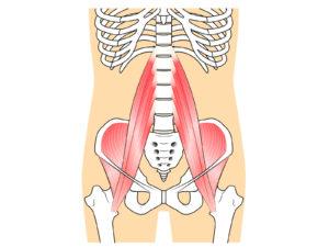 骨盤 おしりの筋肉